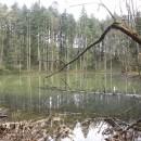 Circuitul Mălinei şi Lacul Veselaru (Munţii Tarcăului)