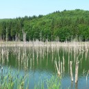 De la Lacul Cuejdel pe culmile Tarniţelor şi Muncelului (Munţii Stânişoarei)