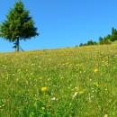 La izvoarele Trotuşului: munte şi flori
