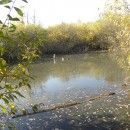 Din Dofteana/BC pe Dealul Pânca pe la Lacul de la Ariniş