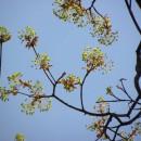 Florile Perchiului (Subcarpaţii Tazlăului)