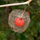 Flora ilustrată a Dealului Perchiu (Subcarpații Tazlăului)
