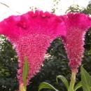 Anomalii și malformații în lumea plantelor