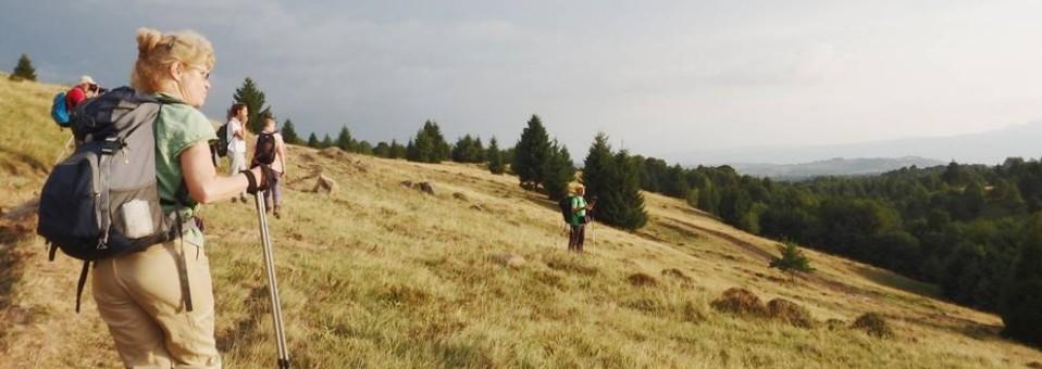 Timid, în Munții Lăpușului !