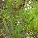Flori dintr-o (altă) margine de drum – Pădurea Spătaru de lângă Buzău