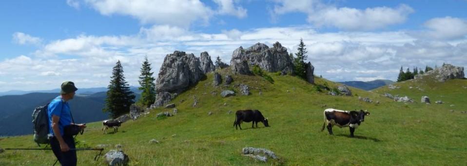 Din Munții Țibăului pe Obcina Mestecăniș